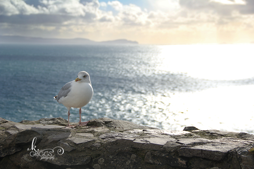 St. Louis Photographer - Ireland - bird next to water